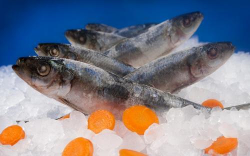 Замразена риба Сардина