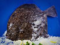 Замразена риба Калкан